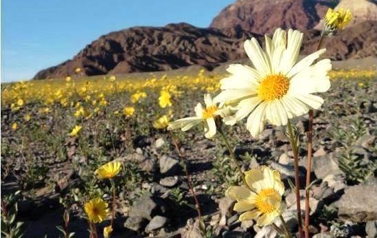 Необычная пустыня