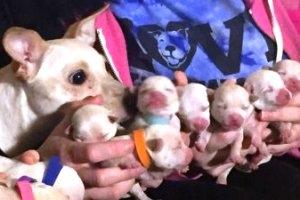 Рождение щенят