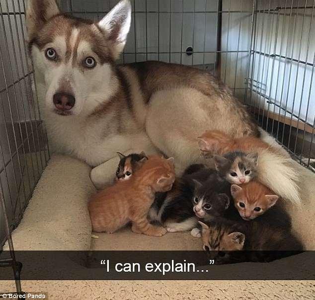 Владельцы домашних животных делятся смешными снимками своих любимцев, делающих веселые вещи