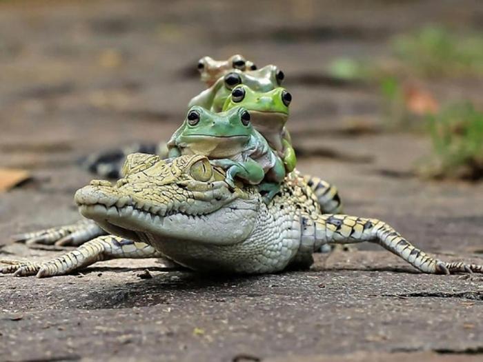 Веселые снимки показывают, что маленькие животные прицепляются к более крупным