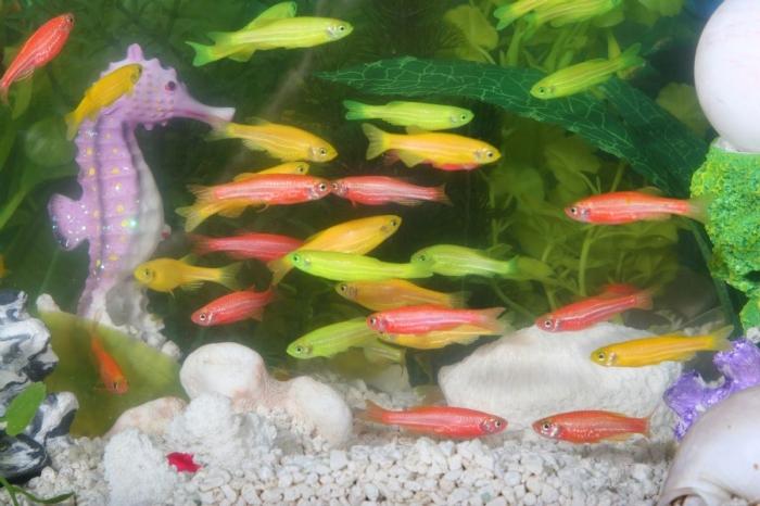 Как восстановить спинной мозг аквариумными рыбками