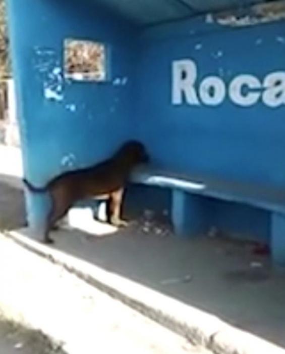 Собака стоит три дня, глядя в стену, и никто не знает, почему