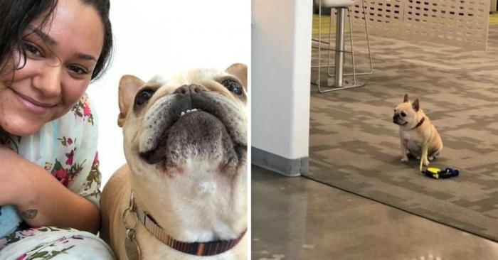 Очень хорошая собака просто влюбила всех в себя, когда она терпеливо ждет возле кафе