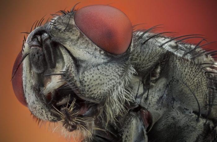 Увеличенные фотографии пауков и мух будут преследовать вас всегда