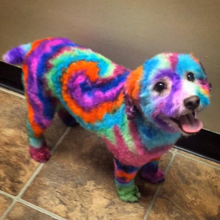 Женщина красит свою собаку в психоделические цвета, потому что, как она говорит, ей это нравится