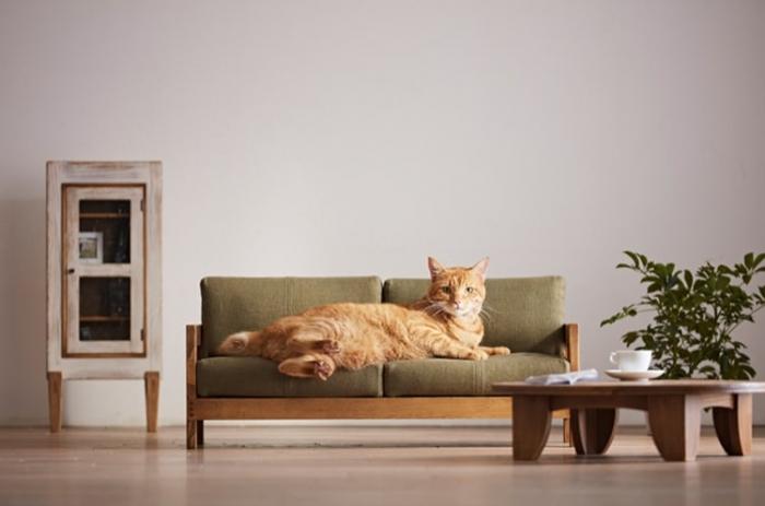 Предметы мебели для кошек