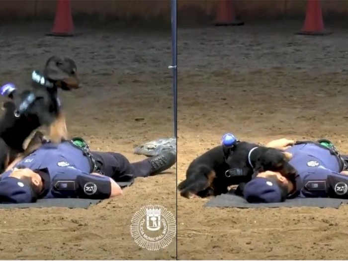 Невероятная собака, обученная выполнять искусственное дыхание всем, кто потерял сознание