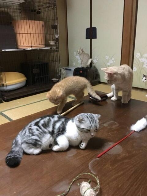 Новая услуга с котом внутри отеля