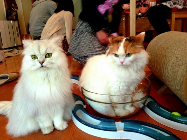 Открытие нового кафе с кошками