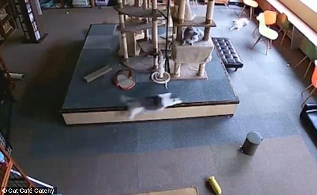 Кошки в дневном отделении по уходу убегают за несколько секунд перед землетрясением в Японии