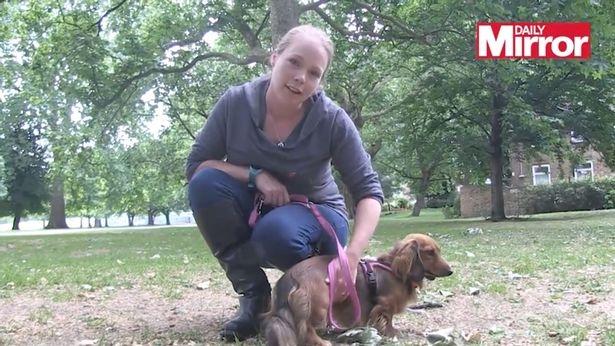 Почему вы никогда не должны гладить собаку по голове - и что делать, когда вы встретите очаровательного пушистого друга