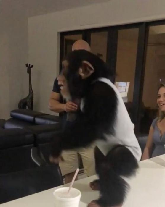 Шимпанзе не может скрыть восторга от воссоединения с приемной семьей, которая воспитала её