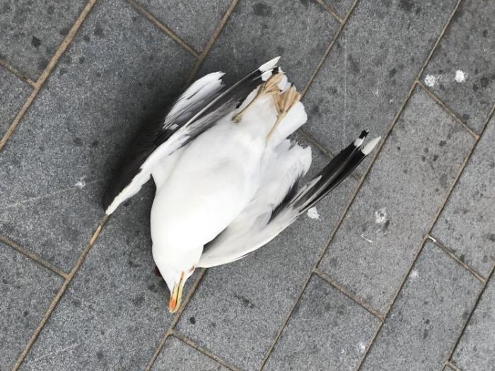 Мужчина забил чайку до смерти, после того как она украла чип с его тарелки
