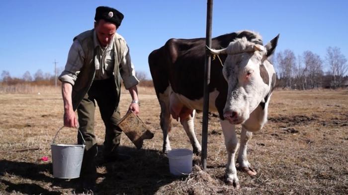 «Странное происшествие»: голова коровы сломала челюсть фермера в штате Коннектикут