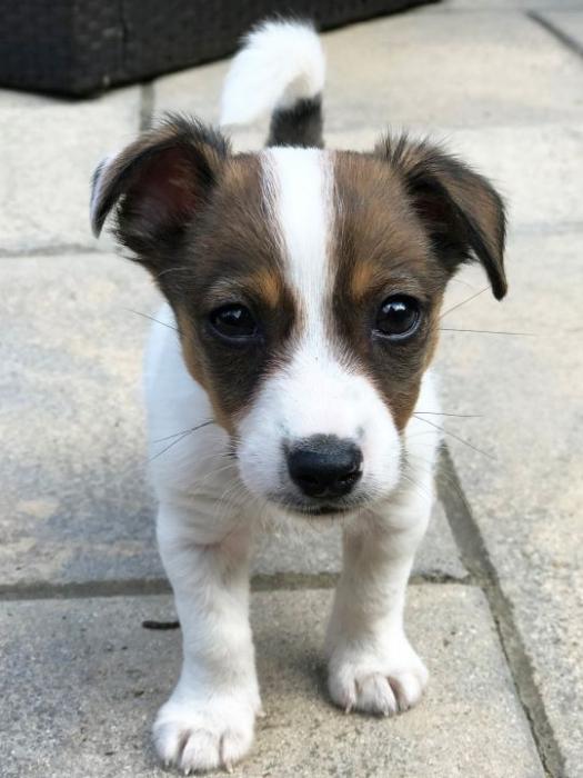 Владельцы вернули щенка через несколько часов после его покупки, потому что они больше не хотят его видеть