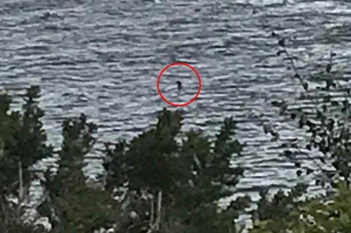 12-летняя девочка сделала «лучшую фотографию Лох-Несского чудовища за многие годы», потому что «голова и шея чудовища» видны на расстоянии 15 метров от берега