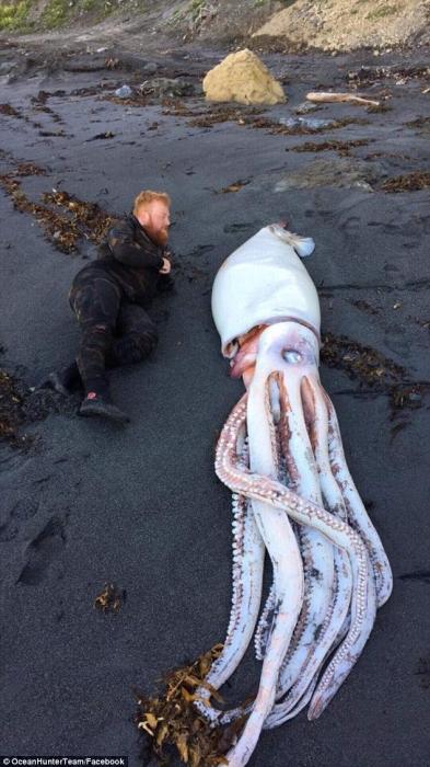 Идя на утреннее погружение братья натолкнулись на монстра-кальмара