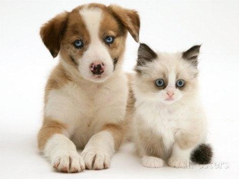 В США поедание котов и собак отныне вне закона.