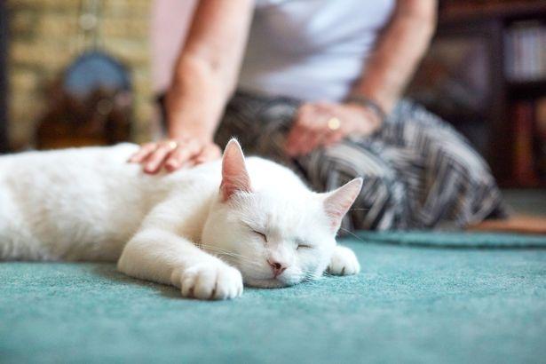 Кошки, приносящие счастье