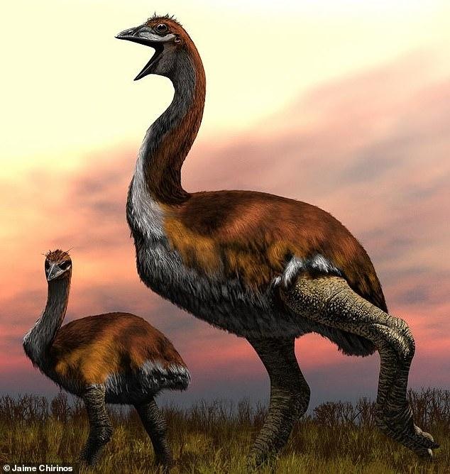 Крупнейшее в мире птица, которая когда-либо существовала была 3-метра ростом, не летала и жила на Мадагаскаре 1000 лет назад