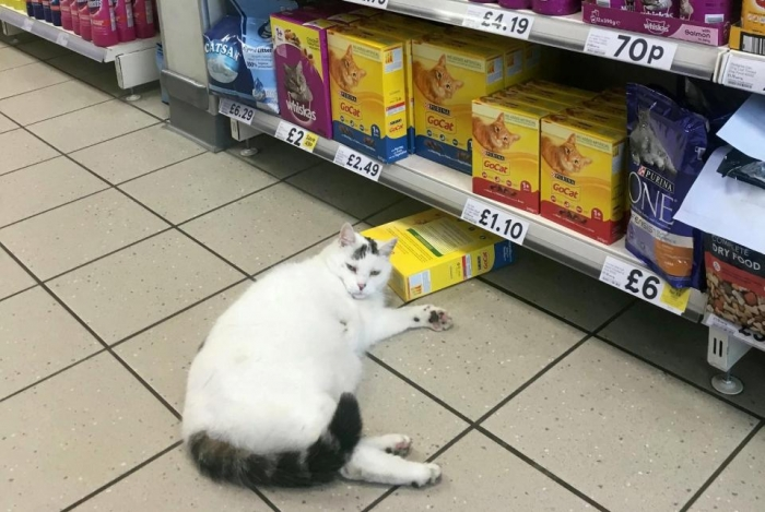 Ошеломленные покупатели супермаркета Tesco сфотографировали толстую кошку, лежащую рядом с коробкой кошачьего корма