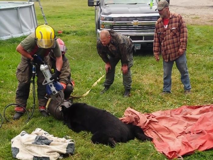 Медведь, голова которого застряла в бидоне из под молока, был освобождён с помощью «Челюстей жизни»