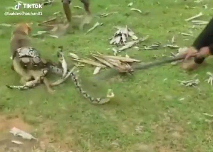Драматический момент дети отбиваются от большой змеи, пытающуюся убить их собаку