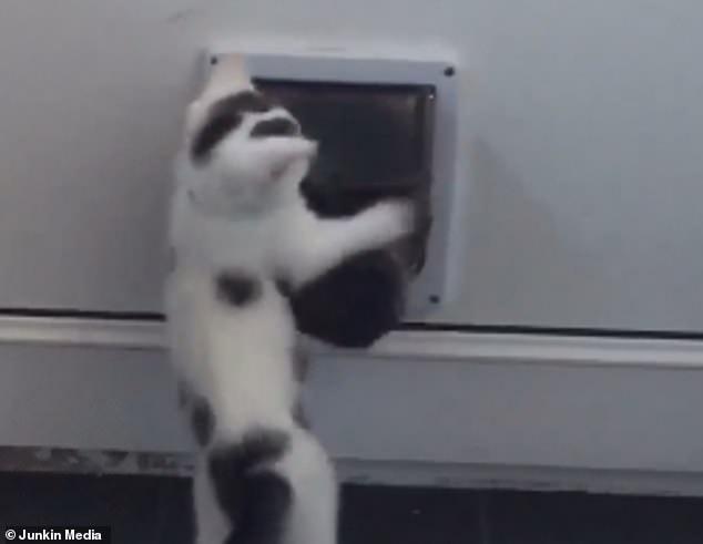 Очаровательный котенок пытается остановить любопытную собаку от использования кошачьего хода