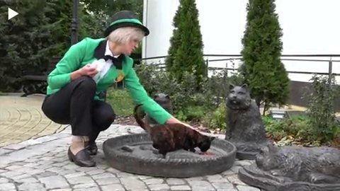 Россиянка мечтает работать главной по кошкам