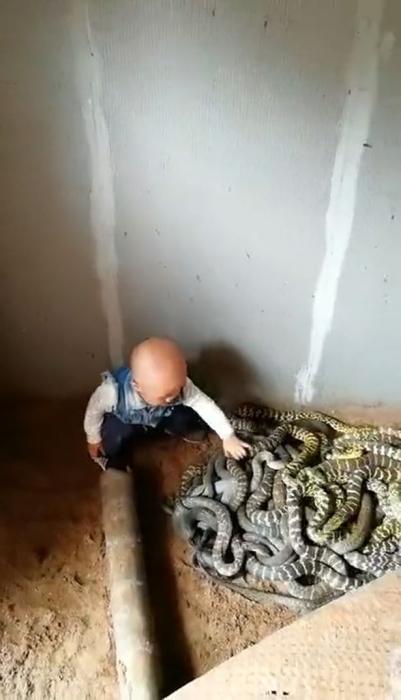 Бесстрашный ребенок разбирается с огромными змеями, еще даже не научившись говорить