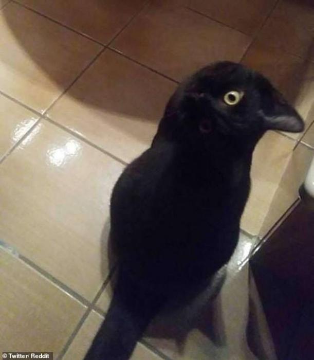 Это ворона или кошка? Оптическая иллюзия стала вирусной, окончательно запутав Интернет