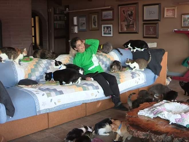 Лина Латтанцио женщина, у которой живет 1100 кошек в доме