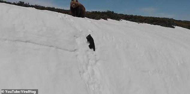 Фильм про детёныша медведя старающегося подняться на заснеженную гору за матерью посмотрело несколько миллионов людей