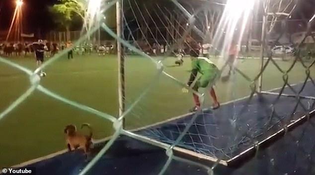 Ничего не подозревающая собака отбила пенальти, выбежав на футбольное поле в решающий момент