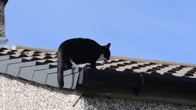 Кошка Милли любит забираться высоко, что бы посмотреть на землю с крыши