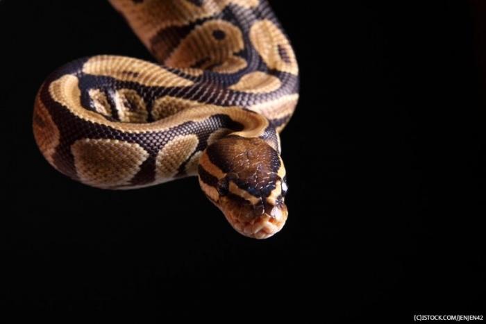Мужчина из Орегона украл змею, засунув её в штаны