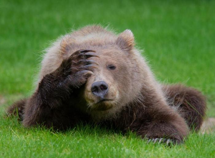 Белка, занимается тайцзи, танцующие ящерицы и медведь с больной головой ... это победители конкурса Смешная Дикая природа 2018