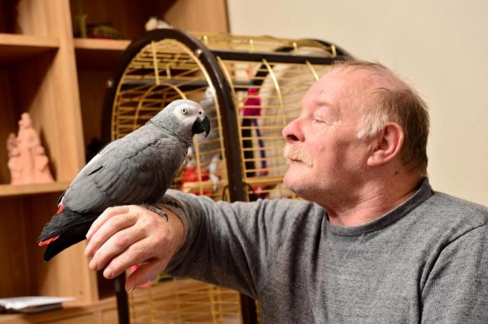 Пожарные примчались в «горящий дом» и обнаружили там только домашнюю птицу попугая, имитирующего звуки пожарной сигнализации