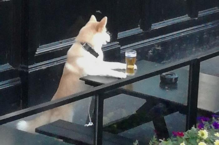 Появилась фото дерзкой собаки, которая лакает из пинты своего владельца во дворе паба