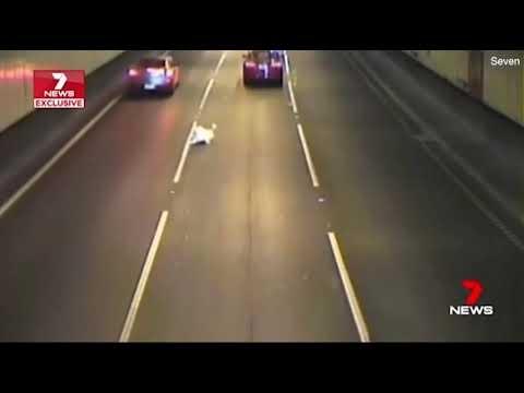 Как пес выжил? Машины тормозят, пропуская собаку, когда пес выпрыгнул из машины в оживленном туннеле
