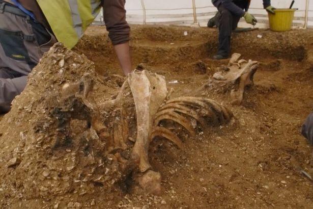 Скелет «вампира», пронзённый копьем после смерти, обнаружен в Йоркшире