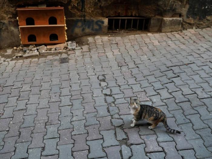 Тайная жизнь уличных кошек Стамбула