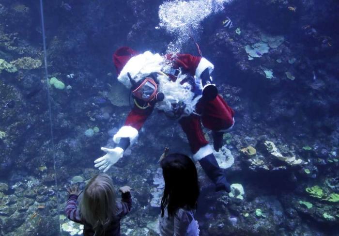 Дед Мороз с аквалангом развлекал посетителей aквариума Сан-Франциско тем что кормил рыбу