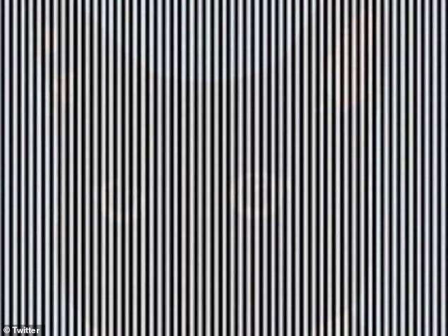 Животное видите на картинке? Новейший обман зрения, подвигайте головой вперед-назад, чтобы наблюдать обман зрения!