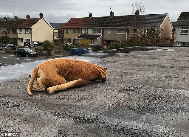 То меховую шапку, приняли за мертвого кота, то кто-то игрушечного скорпиона принес на улицу, Охрана животных рассказала о своих веселых вызовах