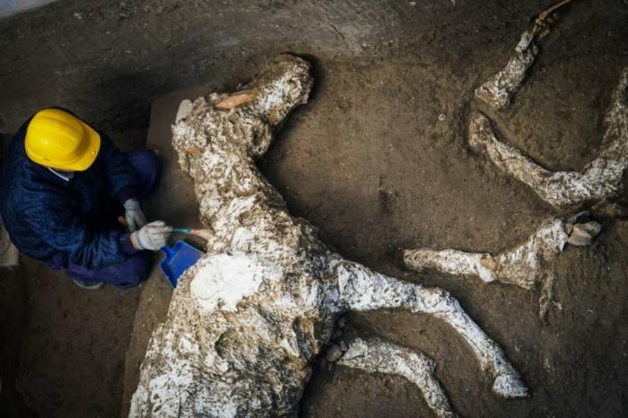Недалеко от Помпей был обнаружен конь, засыпанный пеплом