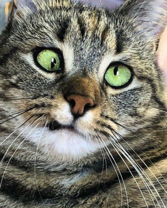 Мы влюбились в косоглазую кошку Олив