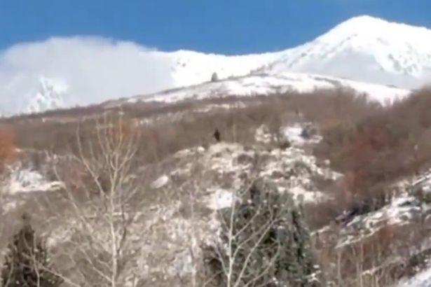 Охотники утверждают, что странная большая фигура в предгорьях Юты – снежный человек