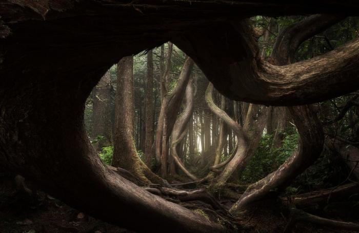 Захватывающие фото раскрывают природную красоту Земли на награду «Пейзажный фотограф»