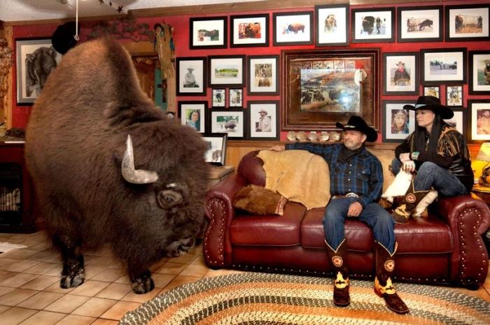 Любители животных показывают жизнь за кулисами с хищниками и крупными животными